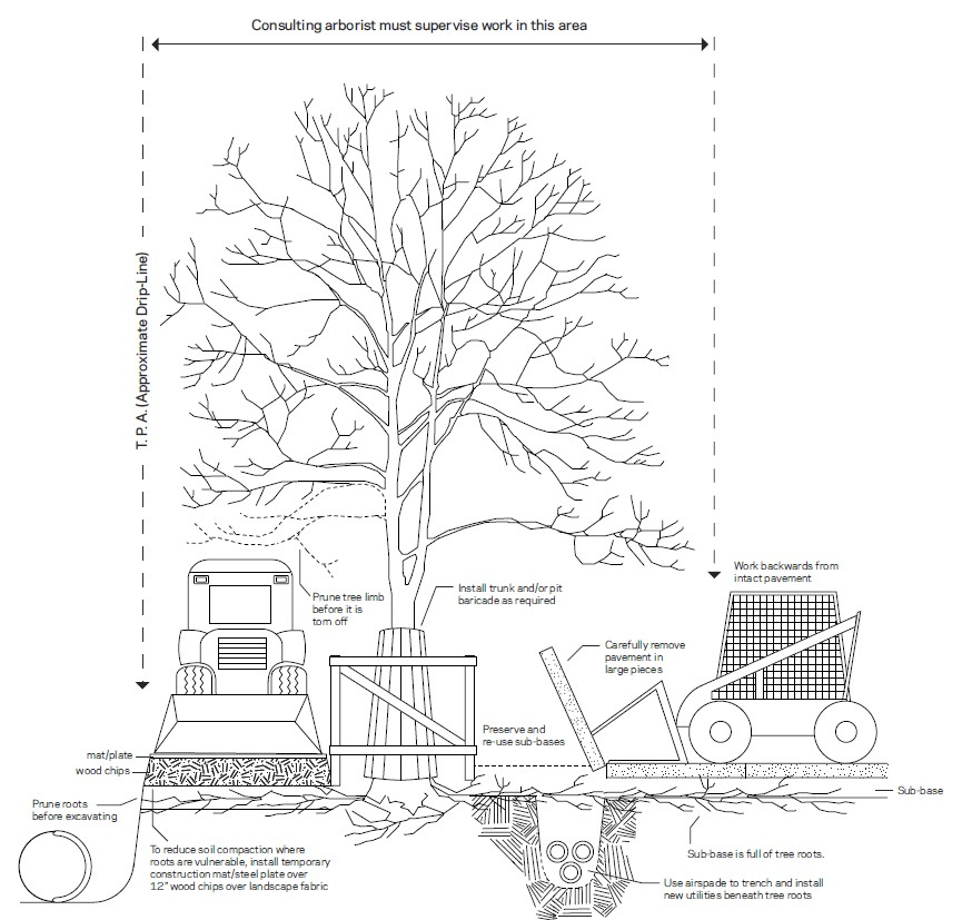 Tree protection area diagram